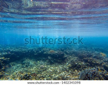Underwater landscape with tropical fish and coral reef. Air bubbles in blue seawater. Marine animal in wild nature. Coral reef view. Tropical seashore environment. Exotic island snorkeling or diving
