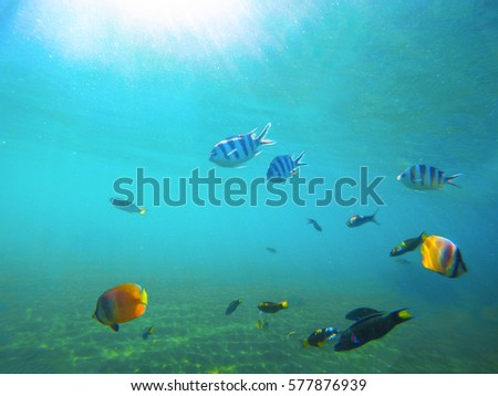 Free Photos White And Black Tropical Fish In An Aquarium Fish On