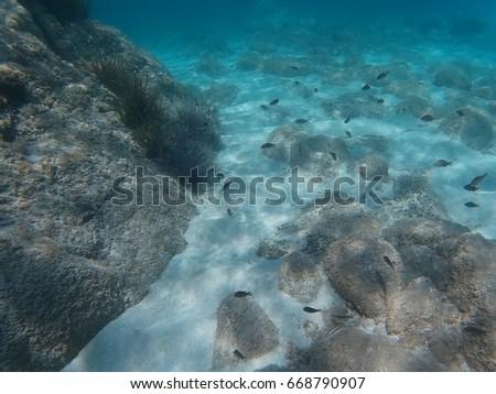 underwater life #668790907