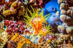 Underwater life in macro scene. Beautiful underwater life macro view. Organism in underwater world. Undersea creature macro view