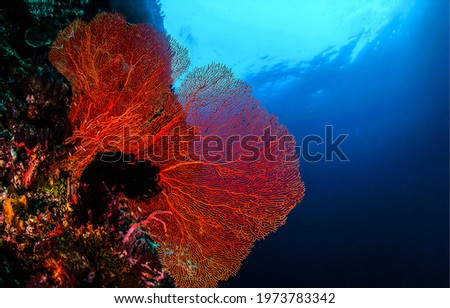 Underwater life in sea depths. Red coral underwater. Under water red coral. Underwater red coral