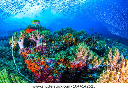 Underwater life landscape #1044142525