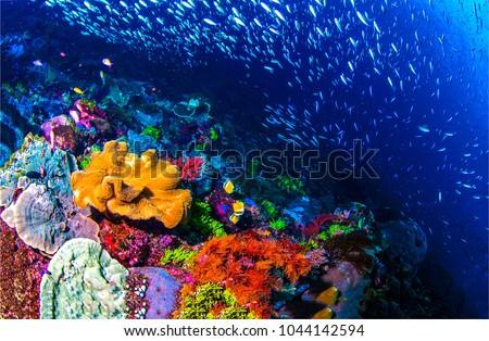 Underwater life landscape. Fish shoal at coral reef ocean underwater