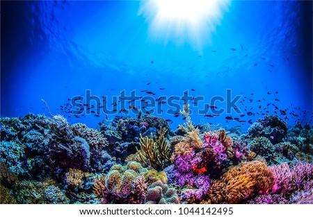 Underwater life landscape. Fish shoal underwater #1044142495