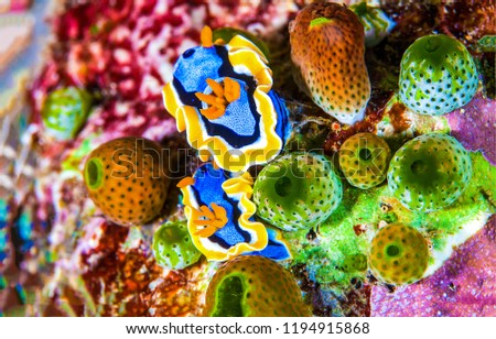 Underwater life macro. Macro life underwater. Underwater life scene. Underwater macro world view