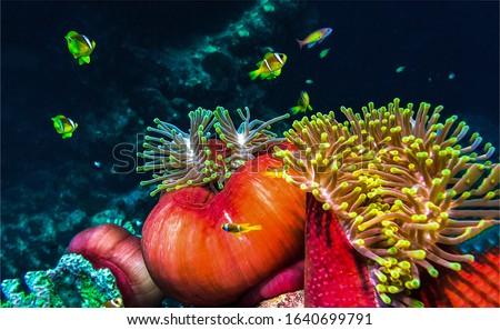 Underwater life macro scene. Underwater world view. Macro scene underwater