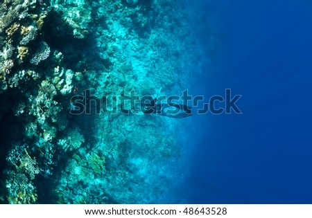 Underwater life. Man snorkeling at a coral reef