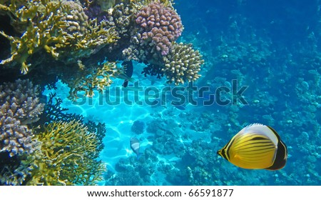 Underwater life of a hard-coral reef, Red Sea, Egypt
