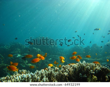 underwater light with fish