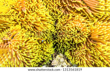 Underwater macro life view. Yellow underwater life. Underwater macro world yellow. Underwater yellow background #1313561819