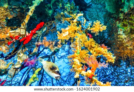 Underwater macro world scene. Underwater life view