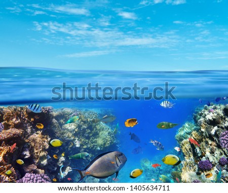 Underwater marine life of the Red Sea and blue sky. Colorful coral reef fishes and reefs. #1405634711