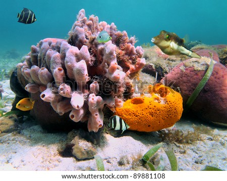 Underwater marine life with colorful sea sponges and tropical fish in the Caribbean sea