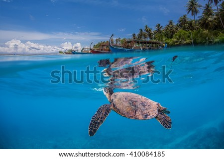 Underwater marine wildlife postcard. A turtle floating under water surface with shoreline and maldivian boats. Seascape tropical image with palm trees from Maldives #410084185