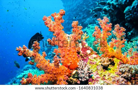 Underwater orange coral macro scene. Orange coral underwater. Underwater world scene