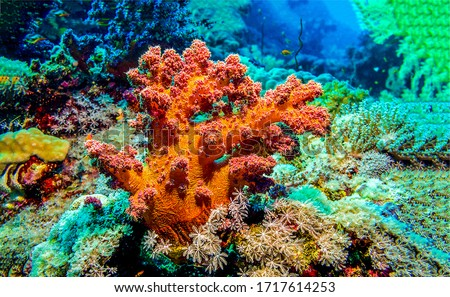 Underwater orange coral view. Under water coral