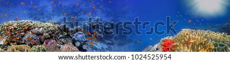 Underwater panorama and coral reef and fishes. Red Sea, Egypt