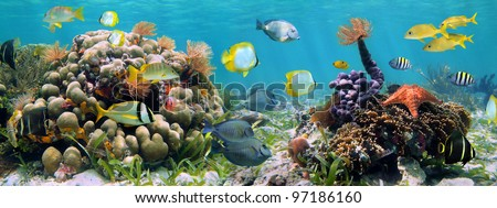 Underwater panorama in a shallow coral reef with colorful tropical fish and marine life