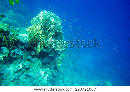 Underwater panorama with fish and coral #220721089