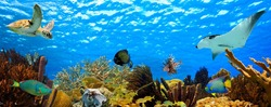 Underwater panorama with great variety of fish and coral