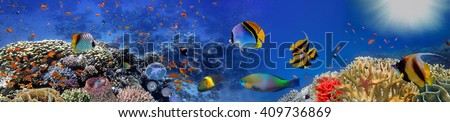Underwater panorama with turtle, coral reef and fishes. Red Sea, Egypt #409736869