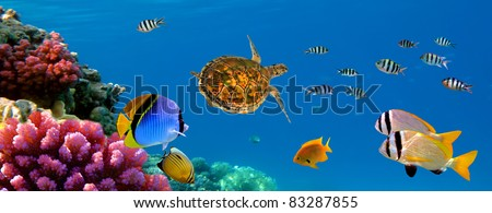 Underwater panorama with turtle, coral reef and fishes. Sharm el Sheikh, Red Sea, Egypt