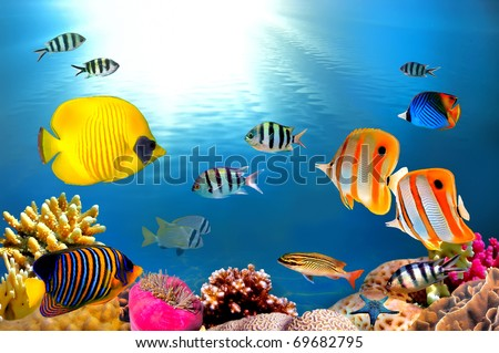Underwater photo of a hard-coral reef in red sea - stock photo