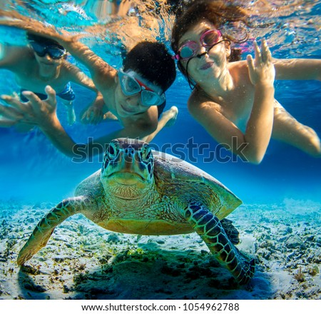 Underwater photo of children snorkeling and swimming with tropical sea turtle. Selective focus, blurred background #1054962788