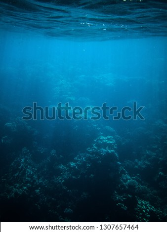 underwater photo of coral reefs in red sea with blue water