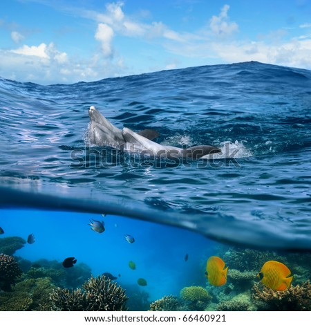 Underwater photo splitted two parts Two happy playful dolphins swimming its back under cloudy blue sky and under them there is coral reef with yellow butterfly fish