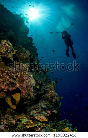 underwater photographer shooting a tropical reef with sun on the surface #1195022416