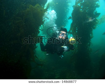 Underwater Photographer swimming through the Kelp in Catalina
