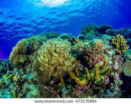 Underwater photography  #673170886