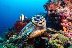underwater photography thailand