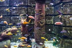 Underwater picture, colorful fish swim near ancient Egyptian sculptures