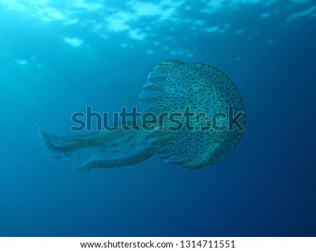 underwater picture of a jellyfish