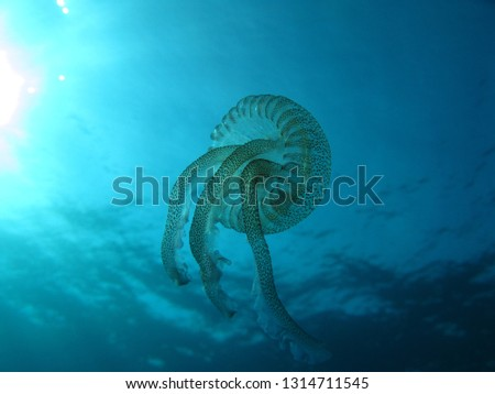 underwater picture of a jellyfish taken from below, looking up towards the surface