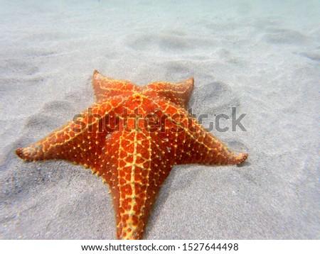 Underwater picture of Starfish in the caribbean sea. Panama.