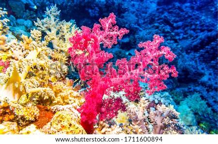 Underwater pink coral view. Pink coral under water. Underwater pink coral