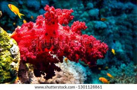Underwater red coral view. Red coral underwater scene. Underwater coral close up. Underwater world view