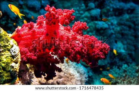 Underwater red coral view. Underwater macro scene