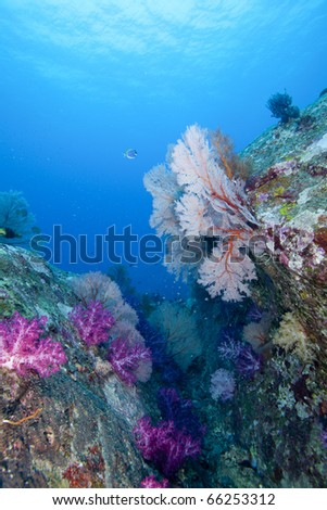 Underwater Reef Canyon in the Andaman Sea, Thailand, Koh Tachai with colorful soft, hard corals and Sea fans!