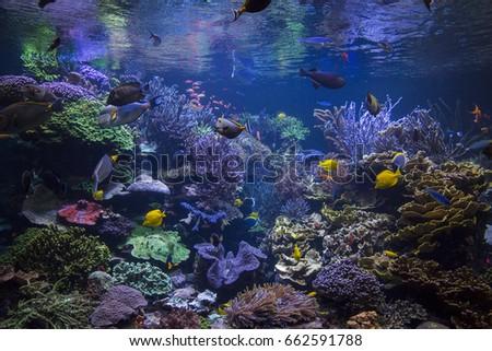 Underwater scene. #662591788
