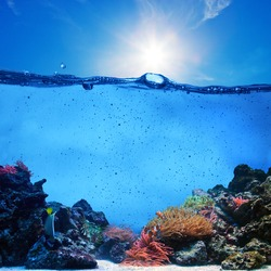 Underwater scene background. Coral reef, blue sunny sky shining through clean water. Space underwater for you to fill or just use standalone. High res