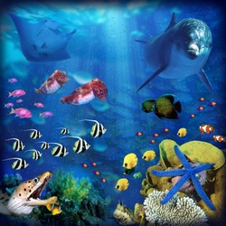 Underwater scene comprised of a colour assortment of sea creatures and reef life.  Super high resolution for many applications.