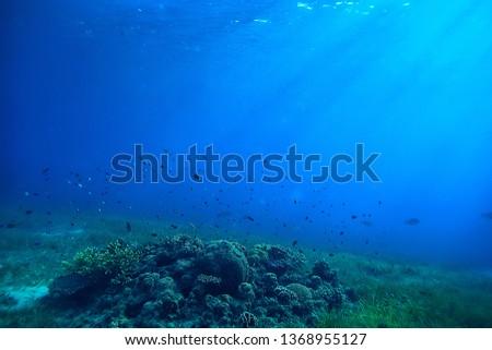 underwater scene / coral reef, world ocean wildlife landscape #1368955127