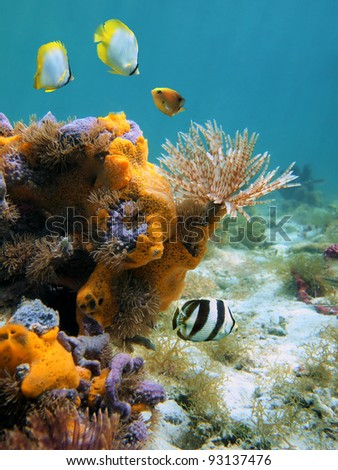 Underwater scene in the Caribbean sea with a feather duster worm, colorful sponges and fish