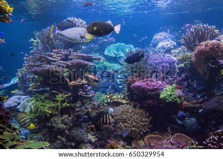 Underwater scene. Underwater world. Underwater life landscape. #650329954