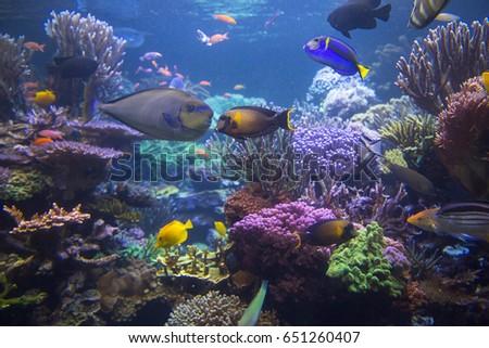 Underwater scene. Underwater world. Underwater life landscape. #651260407