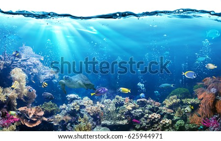Underwater Scene With Reef And Tropical Fish  #625944971